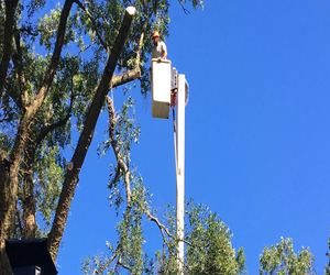 tree removal Mansfield New Jersey