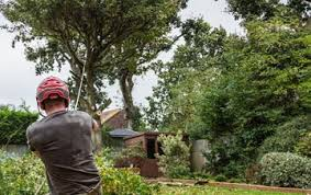 Hire Tree Specialist In Bedminster For Treating Sick Trees Effectively