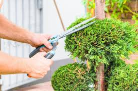 5 Basic Services Offered by Tree Service Professionals