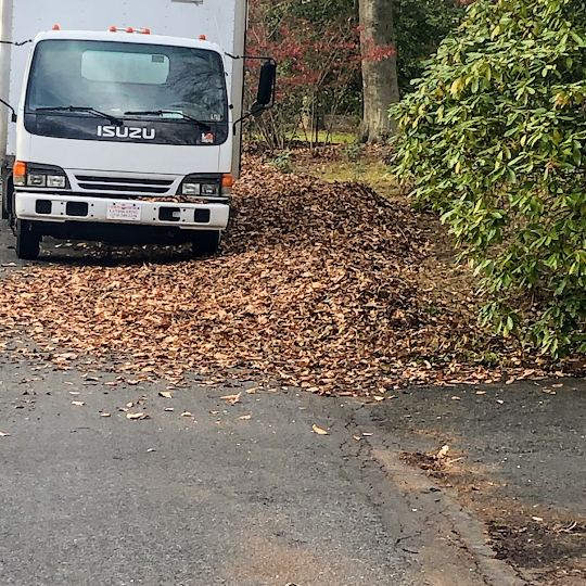 Hire Ttree Specialist In Bedminster For Treating Sick Trees Effectively